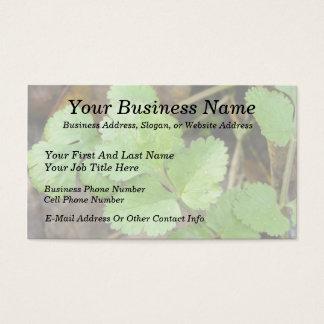 Cilantro Business Card