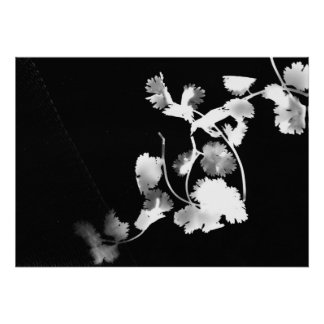 Cilantro Photogram Poster