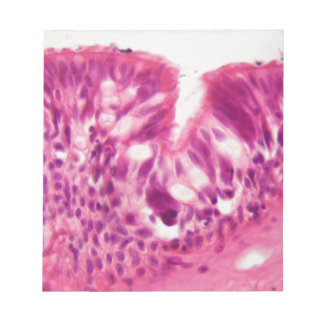 Ciliated epithelium under the microscope. notepad