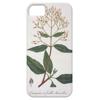Cinchona from 'Phytographie Medicale' by Joseph Ro iPhone 5 Covers