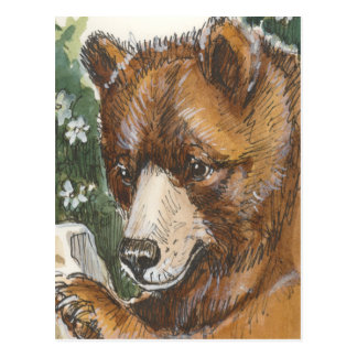 Cinnamon Grizzly Bear Postcard