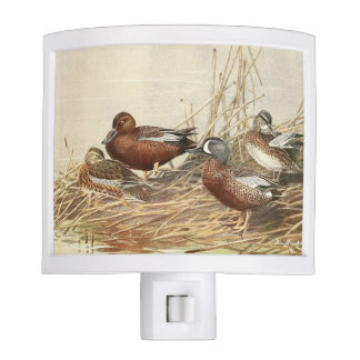Cinnamon Teal Duck Bird Wildlife Night Light