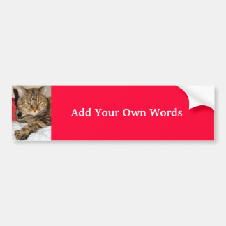 Cinnamon the Cat Bumper Sticker