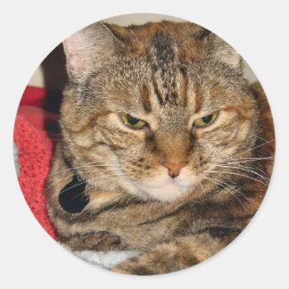 Cinnamon the Cat Round Sticker