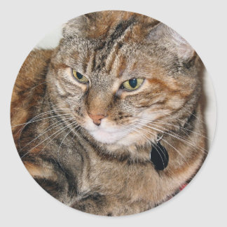 Cinnamon the Cat Round Sticker