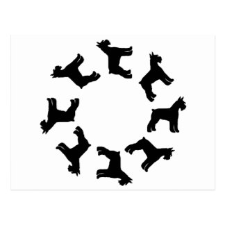 Circle of Giant Schnauzers blk Postcards