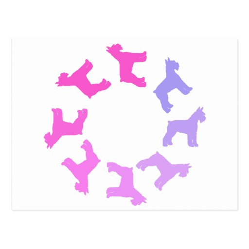 Circle of Giant Schnauzers (pinks to purples) Post Card