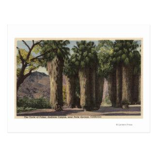Circle of Palms, Andreas Canyon Postcard