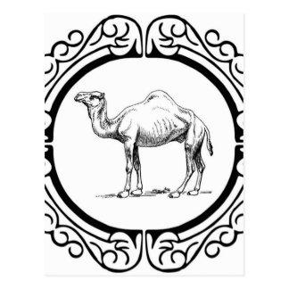 circle of the camel postcard