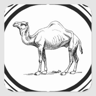 circle of the camel square sticker