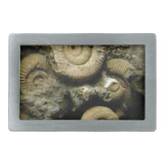 circles of fossil snails belt buckles