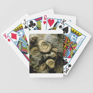 circles of fossil snails bicycle playing cards