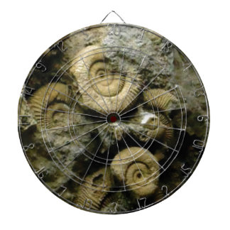 circles of fossil snails dartboard