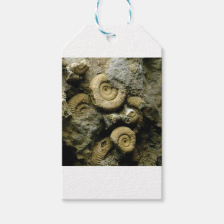 circles of fossil snails gift tags