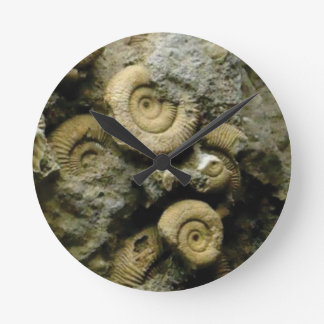 circles of fossil snails round clock
