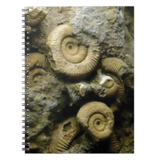 circles of fossil snails spiral notebook