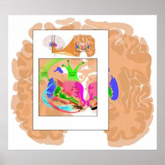 Circuits of Basal Ganglia Part of the Brain Chart