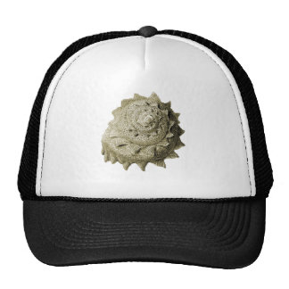 Circular Saw Shell Hats