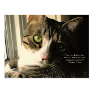 Citation d'animaux de chat tigré et d'amour carte postale
