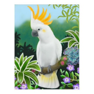 Citron Cockatoo Postcard