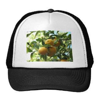 Citrons jaunes sur l'arbre casquettes