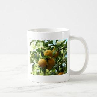 Citrons jaunes sur l'arbre tasse