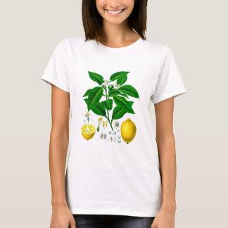 Citrus Fruit Lemon Botanical Print no. 7 Art T-Shirt