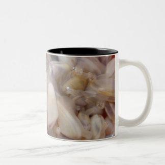 Clams Mug