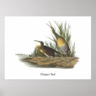 Clapper Rail, John Audubon Poster