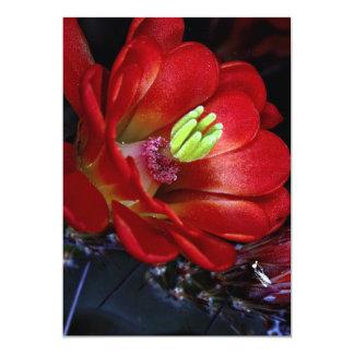 Claret cup cactus (Echinocereus triglochidiatus) Card