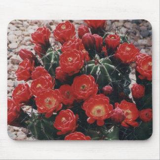 claret cup cactus mouse pad