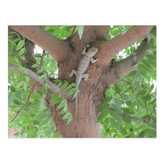 Clark s Spiny Lizard in a Tree Post Card