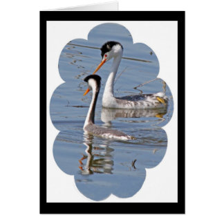 Clarks' Grebes Card