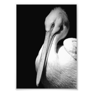 Classic Pelican Art Photo