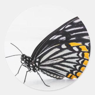 Classic Round Sticker, Glossy - Butterfly Macro Round Sticker