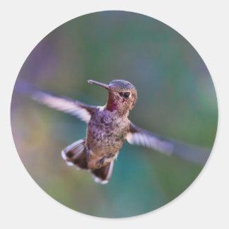 Classic Round Sticker, Glossy - Hummingbird Round Sticker