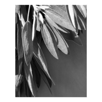 Classic Sage - black and white Letterhead