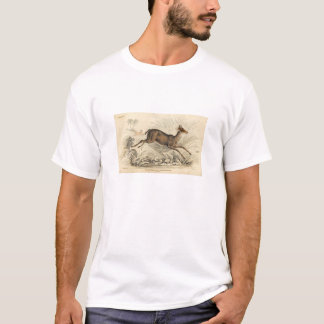 Classic Zoological Etching - Chickara Antelope T-Shirt