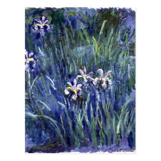 Claude Monet: Irises Postcards