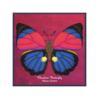 Claudina Butterfly Canvas Print