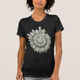 Clavigera Haeckel fin animal vintage de Calcarina T-shirts