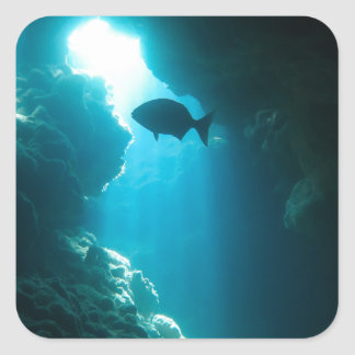 Clear blue cave and fish square sticker