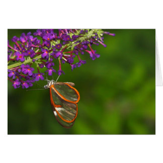 Clearwing upside down card
