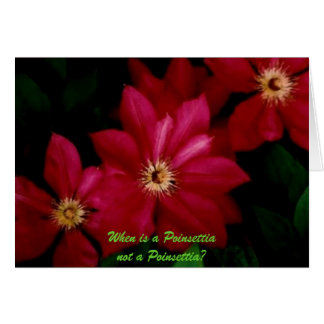 Clematis_1, When is a Poinsettia not a Poinsettia? Card