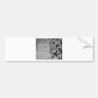 Clematis and Snow fall during a blizzard. Bumper Sticker