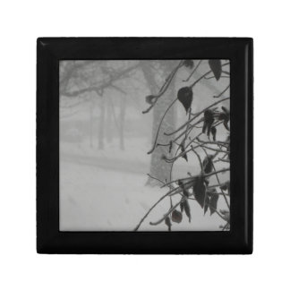 Clematis and Snow fall during a blizzard. Gift Box