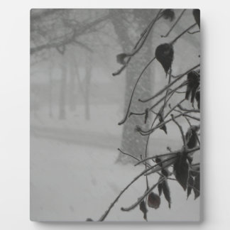 Clematis and Snow fall during a blizzard. Plaque