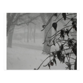 Clematis and Snow fall during a blizzard. Postcard