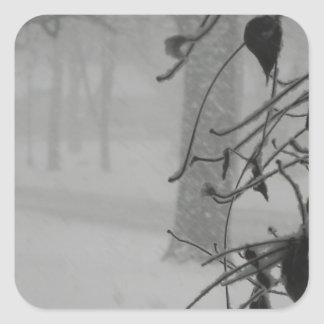 Clematis and Snow fall during a blizzard. Square Sticker