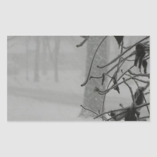 Clematis and Snow fall during a blizzard. Sticker